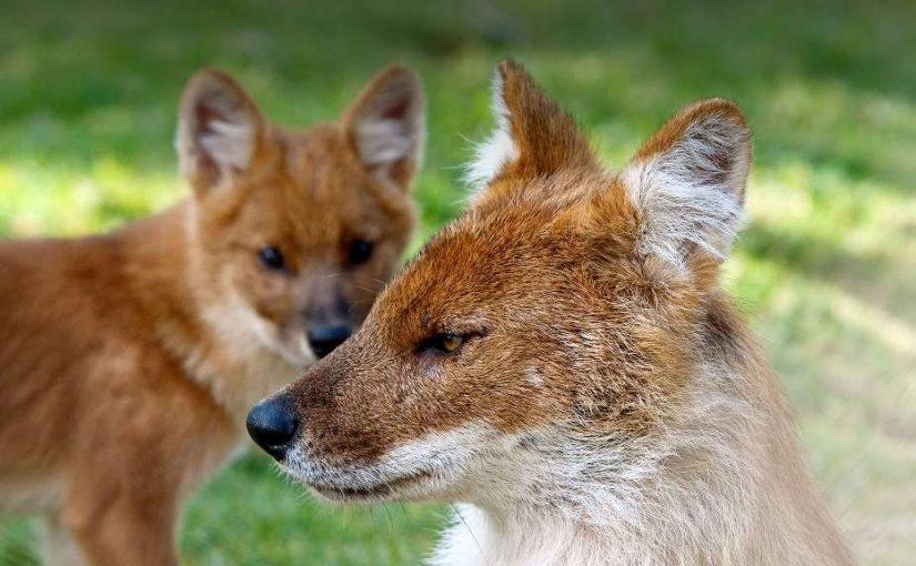 سگ هار و وفادار، وحشی گری در مقابل خوشاخلاقها