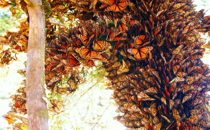 چرا کتاب بخوانیم؟ قسمت سیوهفتم: درک پروانههایی که طوفان میآفرینند و بادهایی که پروانه میکشند.